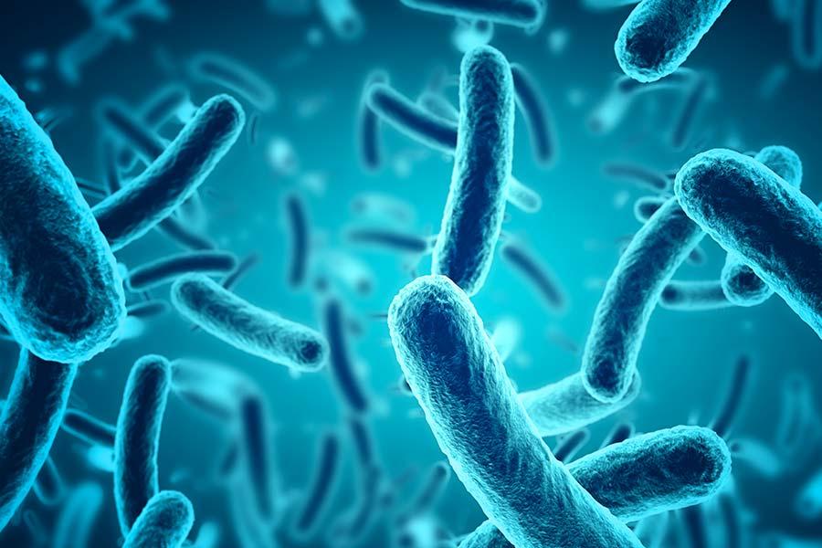 Skin Microbiome Bacteria